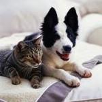 Protéger les chiens et les chats contre le froid