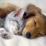Assurance pour chiens et chats : une garantie offrant de nombreux avantages