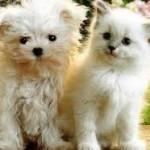 Le mode de prise en charge des frais vétérinaires