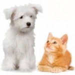 Assurance chiens / chats, dénichez la meilleure offre en recourant au comparateur