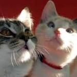 Comment bien choisir une assurance pour chat ?