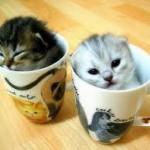 Les nécessités d'une assurance pour votre chat
