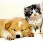 Les risques d'empoisonnement fréquents des chiens et des chats en été