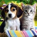 Mutuelle pour animaux de compagnie : faites assurer votre chien et chat de compagnie