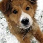 Qu'en est-il des ces maladies que l'assurance pour animaux ne prennent pas en charge?