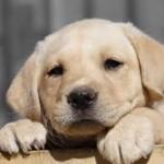 Mutuelle chien : la facilité d'obtenir un devis
