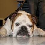 Les bonnes réactions face à l'intoxication d'un chien ou d'un chat