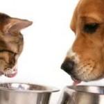 Les aliments qu'un chat ou chien ne doit pas manger