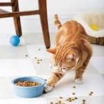 Les vaccins obligatoires pour bénéficier d'une mutuelle pour les chats