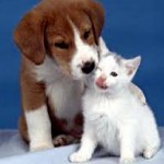 Assurance animaux : une grande vision sur les couvertures santé chats et chiens