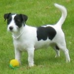 Assurance pour chien : les offres proposées sont en évolution