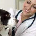 Santé des chiens: maladies de l'œil