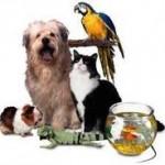 Une assurance santé existe aussi pour les animaux