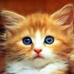 A quelle mutuelle souscrire pour mon chat ?
