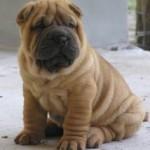 Qu'est-ce que l'assurance chien ne pourrait pas couvrir?