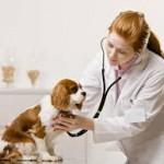 Prestation de l'assurance chien : remboursement des frais de soin