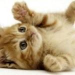 Des conseils pour votre assurance chat