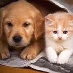 Nouvelles offres en assurance chat-chien d'AssurOne Group et Gefi Pet Insurance
