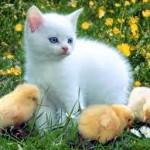 Le choix de la meilleure assurance santé animaux