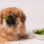 Consulter immédiatement le vétérinaire en cas de réaction allergique chez le chien et le chat