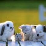 En quoi consiste réellement un contrat d'assurance pour les animaux ?