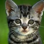 Assurance chat : les raisons de souscrire à une mutuelle chat