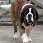 Quelles sont les garanties d'une assurance chien ?