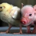 Assurance santé animale : moins répandue en France