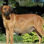 Limitez vos dépenses en matière de santé de votre chien : souscrivez à une assurance adéquate