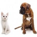 Guide pour le choix d'une assurance maladie pour l'animal de compagnie