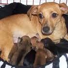 Santé animale : il faut bien surveiller la nourriture d'une chienne allaitante
