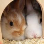 Quid d'une assurance santé pour lapin
