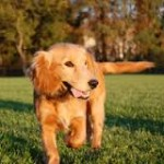 Guide de l'assurance pour chien