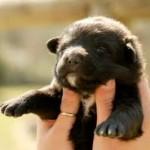 Assurances animaux: pourquoi protéger son chiot ?