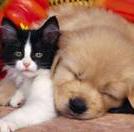 Assurance pour chien et chat : le taux de remboursement et la franchise