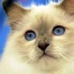 Les raisons de souscription à une mutuelle santé pour chat
