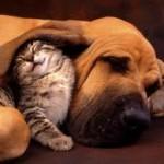 L'assurance chien et chat : pour la prévention du froid