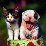 Les soins remboursés par les assurances pour animaux