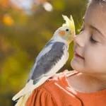 Quid d'une assurance santé pour perroquet