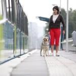 A propos de l'assurance d'un chien guide d'aveugle