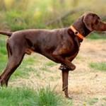 Quid de l'assurance pour chien de chasse
