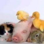 Comment payer moins cher pour une assurance santé animaux ?