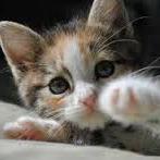 Qu'est-ce qu'il faut faire en cas de maladie causée par les griffes du chat ?