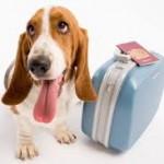 Partir sereinement en vacances avec son chien : comment faut-il gérer ?