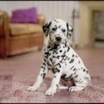 Nexx garanties mutuelles pour chien et chat