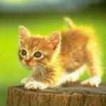 Assurance chat : comment faire le bon choix en mutuelle santé ?