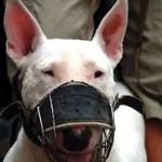 Assurance pour les « chiens dangereux »