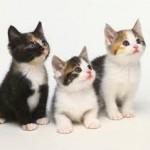 Les aliments à éviter pour un chat