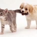 Net assurances garanties pour chien et chat