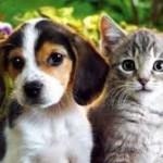 L'assurance pour les animaux de compagnie